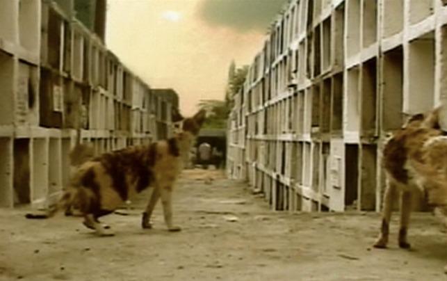 straycats05